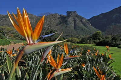 Forget Chelsea Flower Show South Africa Is Where It S At